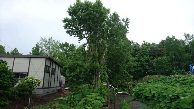 【庭の木の伐採方法】業者に頼まず自分で木を切る方法!注意 ...
